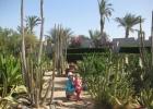 Фото туриста. поляна с кактусами