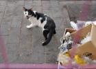 Фото туриста. Кошки хорошо ориентируются во вкусах, различают кислое, горькое и солёное.