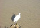 Фото туриста. гордая птица-ибис